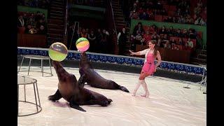 В Ставропольском цирке прошла открытая репетиция к Всемирному дню цирка