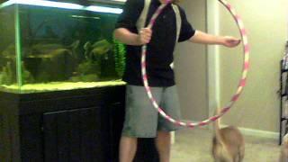 Eva Mini Walrus Dog Shar Pei Basset Mix Jumping Through Hoola Hoop New Trick