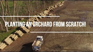 Planting an orchard from scratch!