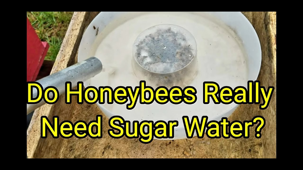 Do Honeybees Really Need Sugar Water?
