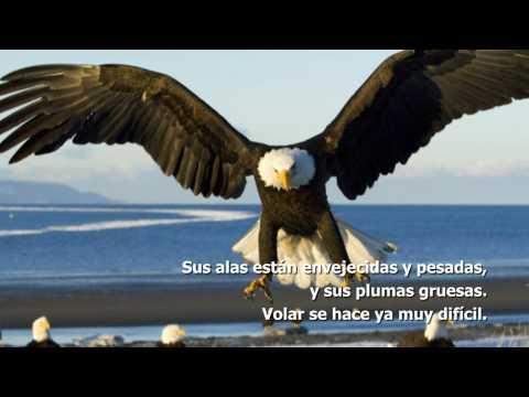 Motivación: El cambio del águila [HD]
