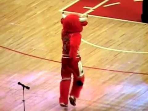 Benny the Bull!!!! Dancing Gangnam Style!!!!