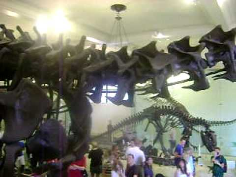 MUSEO DE HISTORIA NATURAL DE NEW YORK