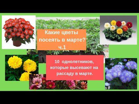 ЧТО ПОСЕЯТЬ В МАРТЕ: Какие цветы посеять в марте? часть1