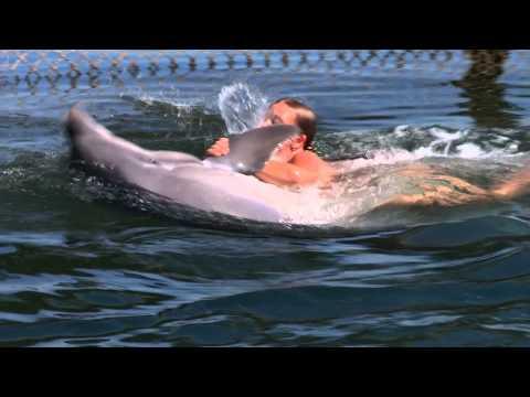 Дельфин Лана. 10 минут счастья.