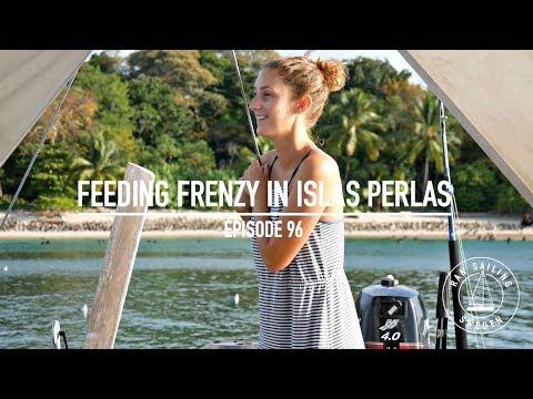 Feeding Frenzy in the Pearl Islands - Ep. 96 RAN Sailing