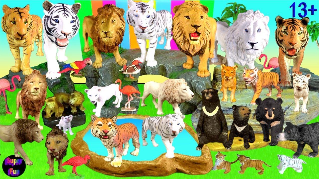 Big Cat Week 2021 Bengal Tiger, Lion, Asiatic Bear 13+