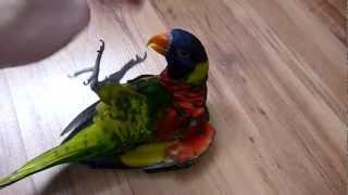 Смешной попугай :)