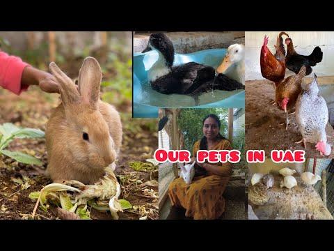 Pets in our farm in Sharjah - UAE  ഞങ്ങളുടെ pets...