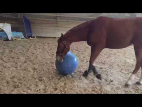 Cavalcades By Nana-Cerise - test du ballon pour chevaux ...