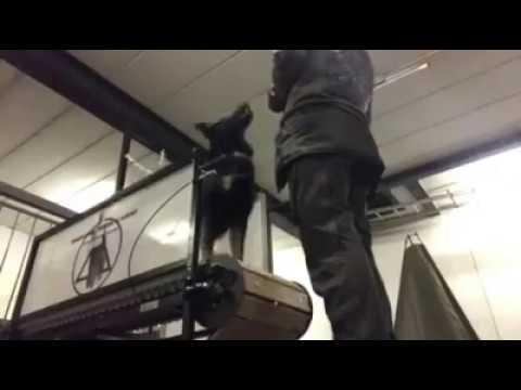 Firepaw Dog Treadmill at Innovating Power Academy Denmark