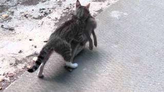 Стеша, мама котят