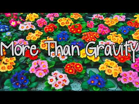 More Than Gravity - Colin & Caroline (Traducida al Español)