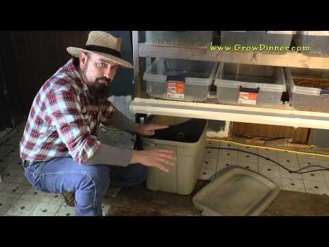 Diy Fodder System Cheap Livestock Winter Food Youtube