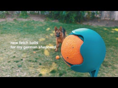 Chuckit! Ultra Balls // German Shepherd Dog