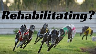 Rollo Tomassi on Rehabilitating Greyhounds thumbnail