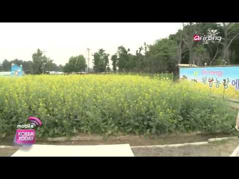 Korea Today - LIVE FROM KOREA - Eco friendly Bio energy Experience farm  Gangdong gu, Seoul