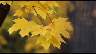 Romantic Piano Music _ Sovereign Moonlight,Marigold ,Relaxing Music Meditation,Study