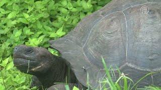 На Галапагоссах открыт новый вид черепах (новости)