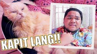 SINUGOD ULIT ANG PUSA KO SA VET CLINIC (LANTANG GULAY NANAMAN!!!) | LC VLOGS #202