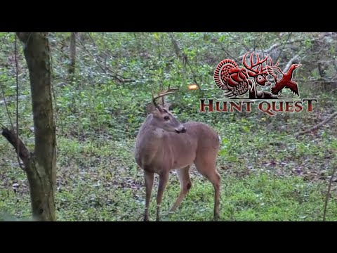 Hunt Quest S3-E18 Jake's First Draw- Florida Public Land Deer Hunting
