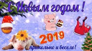 Новый год прикольное поздравление с новым Годом 2019 видео открытка в новый год
