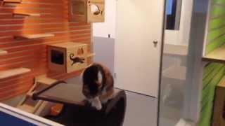 Luxury Cat House