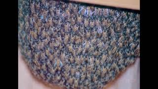 मधुमक्खी पालन भाग 3 - रानी ,नर, श्रमिक मधुमक्खी ।