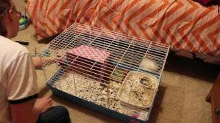 How I Clean my Guinea Pig Cage!!!   Tyla's Tank Center