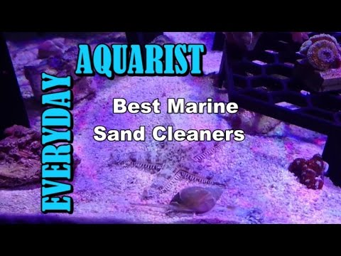 Best Marine Sand Cleaners For Saltwater Aquarium