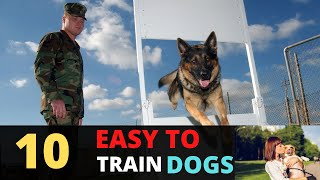 These Are 10 Easiest Dog Breeds To Train    Most Popular And Easy To Train Dogs