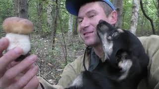 НАШЁЛ СОБАКУ В ЛЕСУ И КУЧУ БЕЛЫХ ГРИБОВ! Собаку забрал домой! ЖАЛКО СТАЛО ПСА!