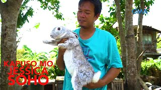 Kapuso Mo, Jessica Soho: Giant bunnies!