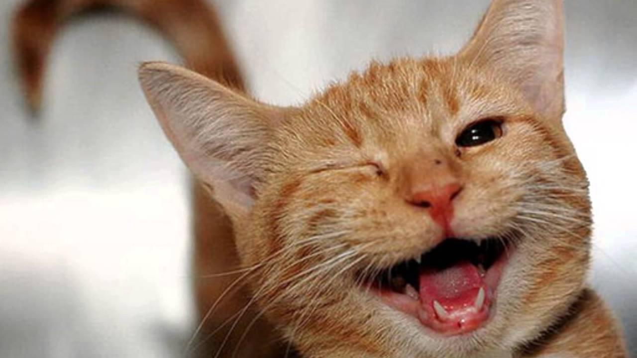 44 Gambar Hewan Ketawa Lucu Gratis