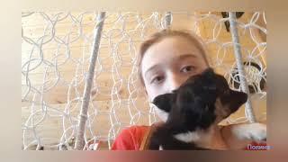 Первое видео с собакой
