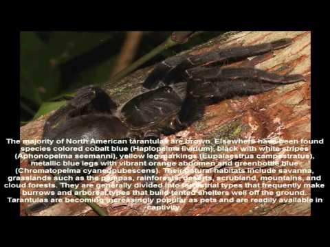 Tarantula (disambiguation)