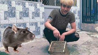 ĐườngHưngVLog - CA SĨ ĐƯỜNG HƯNG bẫy chuột tại nhà ở TPHCM full (mouse trap at home)