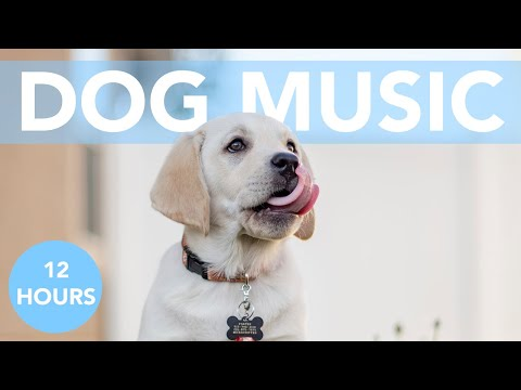 12 HOURS of Deep Separation Anxiety Music for Dogs! NEW 2020