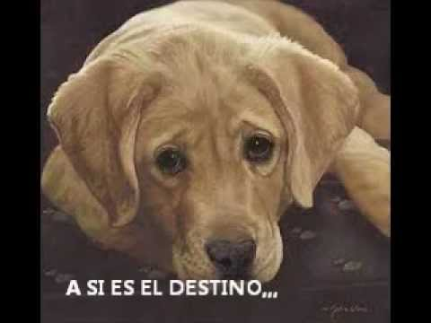 VIDEO DEDICADO A MI PERRO QUE MURIO - YouTube