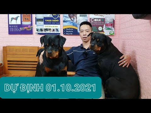 Trại chó Rottweiler Gervi 01.10.2021