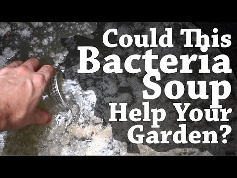 Could This Bacteria Soup Help Your Garden? (TCEG Episode 1)