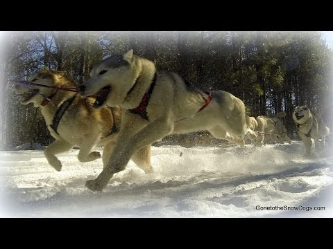 2014 Sled Dog Races 7 Dog Teams Thunder Bay Classic