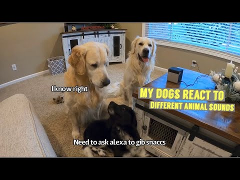 My Dogs React To Different Animal Sounds