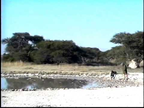 Botswana - Maun to Naxi Pan NP Tented Safari Video 2000 - 1 of 5