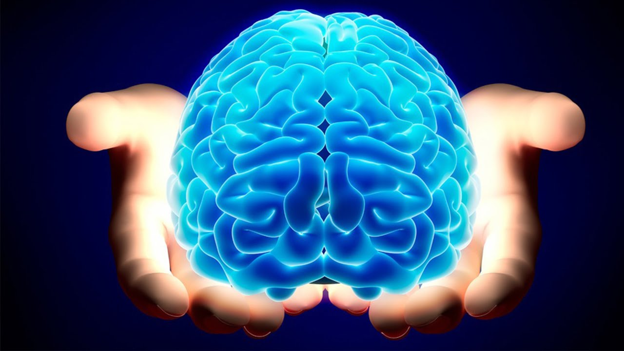 the most amazing facts about the human brain - youtube, Human Body