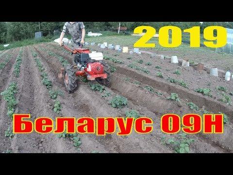 Окучивание картофеля мотоблоком  мтз БЕЛАРУС 09H