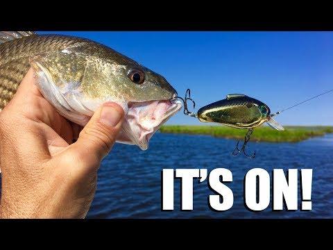 Redfish CLOBBERING this bait right now