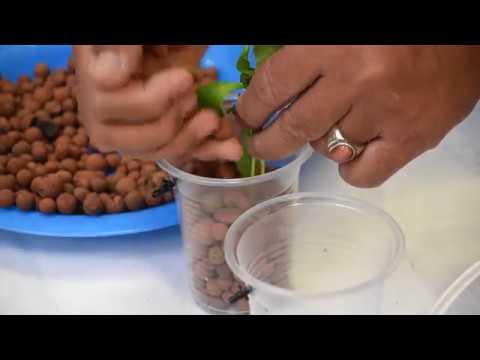 Pertanian Bandar DIY: Mini Akuaponik
