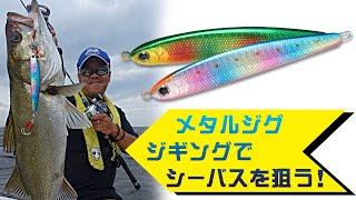 ワンダージグ80g / 沢村智之 / 東京湾シーバス / 秋