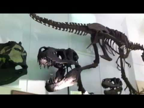 T-Rex Dinosaur Exhibit in South Dakota